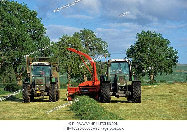 Tractors foraging grass into trailer, silage making, Cumbria, England, may