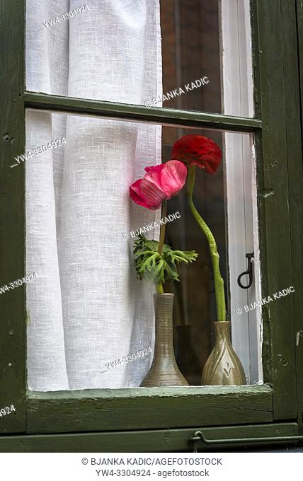 Flowers in window, Copenhagen, Denmark
