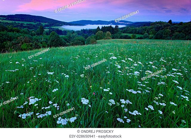 Blooming meadow in Bohemian-Moravian Highlands during sunset, Czech Republic