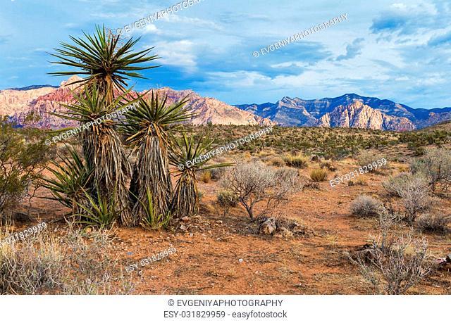 Desert near Red Rock Canyon, Nevada, USA