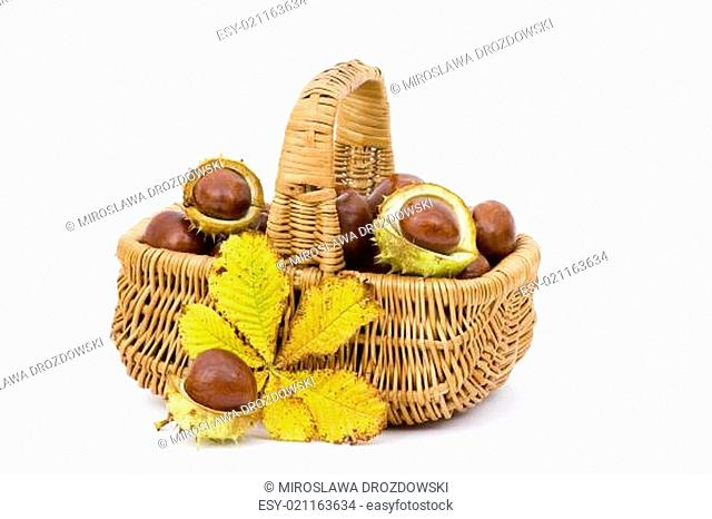 basket full of chestnuts and autumnal leaves