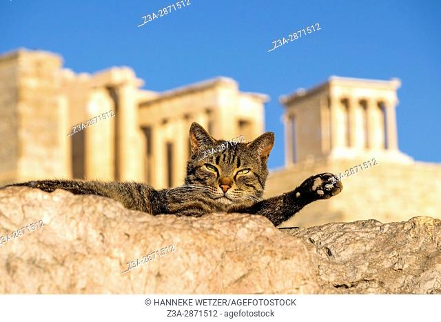 The cat of the hill in front of the Acropolis in Athens, Greece