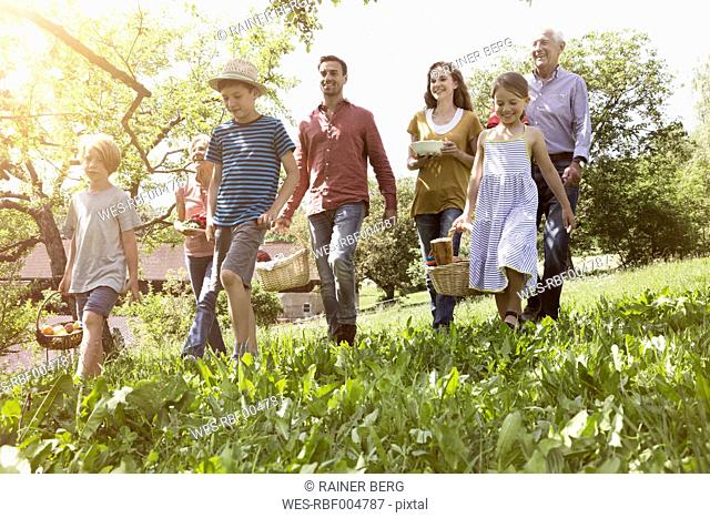 Extended family walking with picnic baskets in meadow