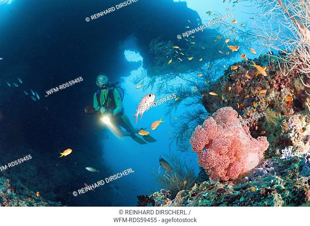 Diver and Red Soft Coral, Dendronephthya mucronata, Maya Thila, North Ari Atoll, Maldives