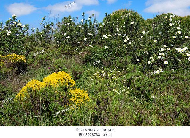 Wildflowers in spring, Algarve, Portugal
