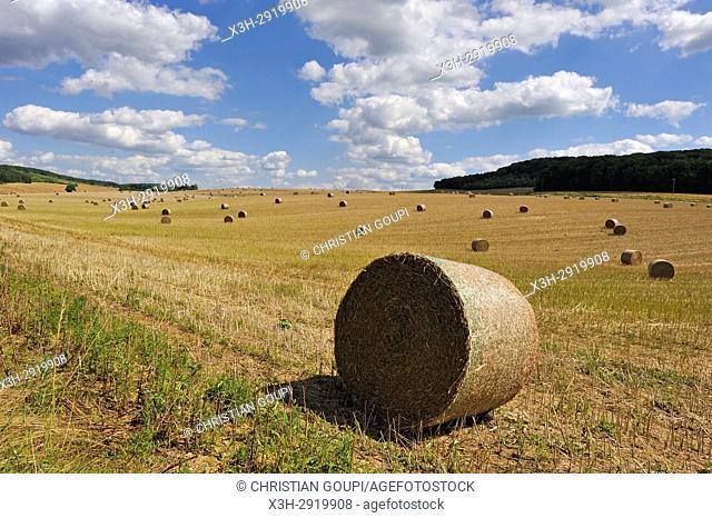 straw rolls in an harvested field, Allier department, Auvergne-Rhone-Alpes regionFrance, Europe