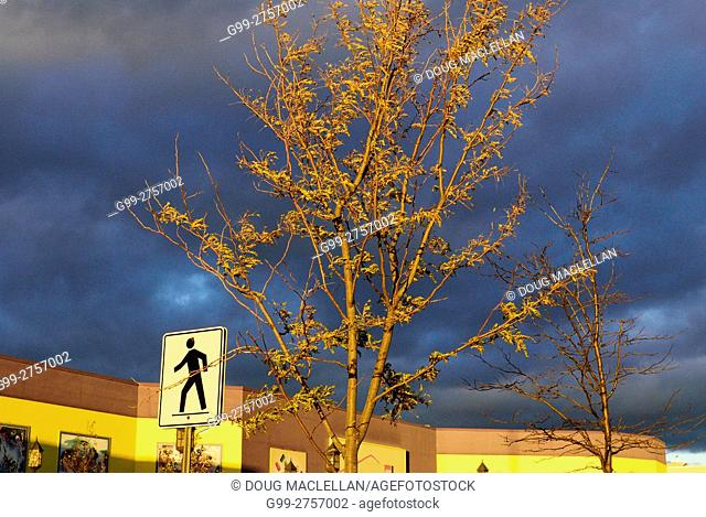 Pedestrian crosswalk sign and tree with dark clouds late in the afternoon near the entrance of Vaughan Mills Mall, a large outlet mall north of Toronto, Canada