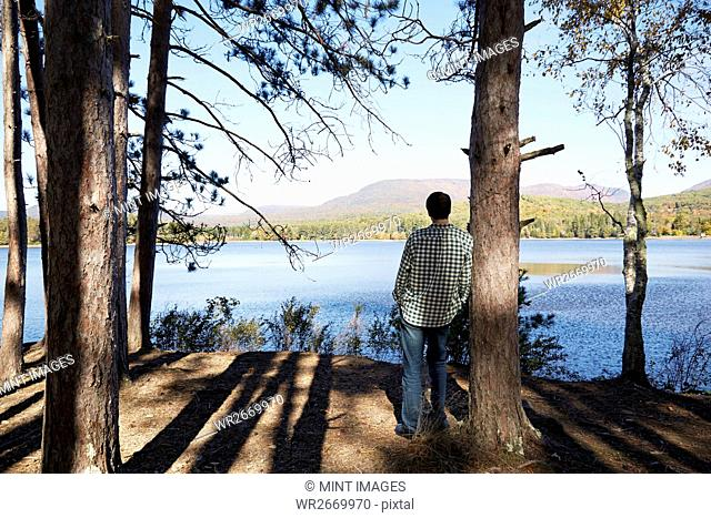 A man standing in the shade of pine trees looking out over a lake and the mountain and forest landscape