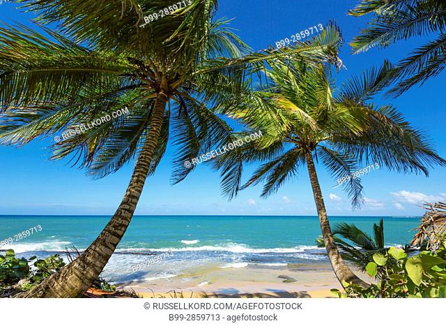 PALM TREES PLAYA PINONES BEACH LOIZA PUERTO RICO