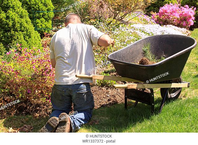 Landscaper with wheelbarrow weeding a flower garden
