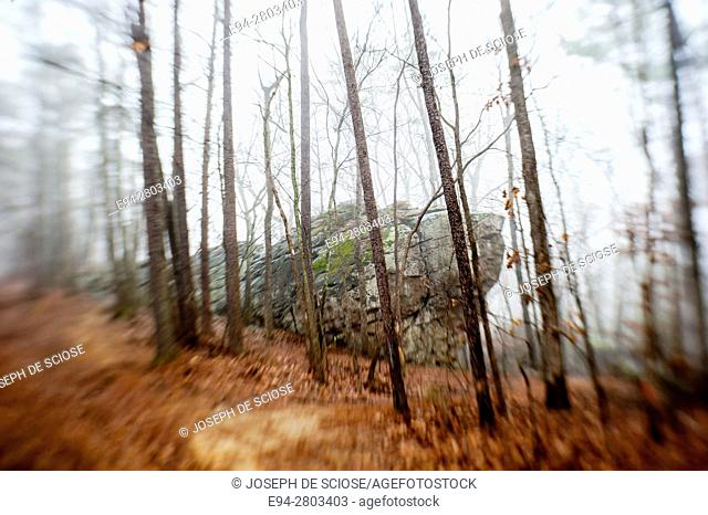 Moody forest scenes, The Moss Rock Preserve, Hoover, Alabama USA