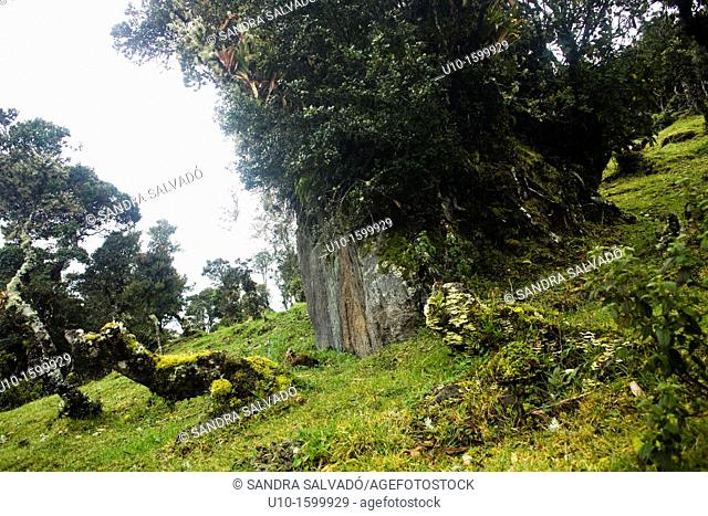 National Park Puracé, Colombia