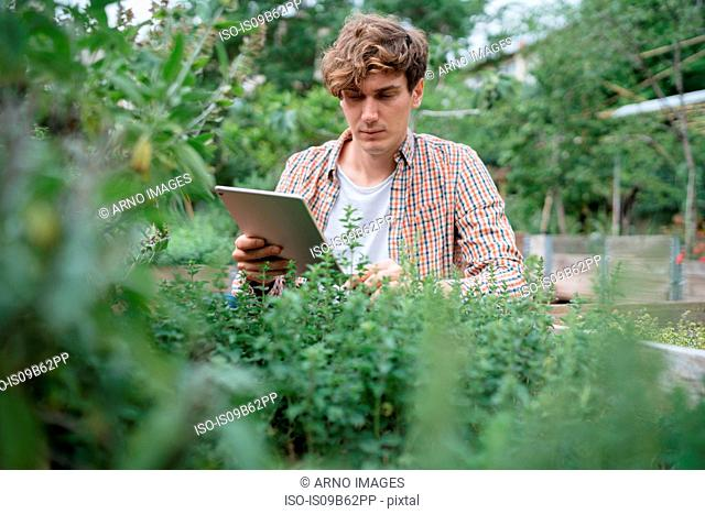 Man in garden using digital tablet to identify plant