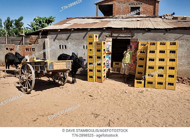 Zebu cart beer delivery, Belo Tsiribihina, Madagascar