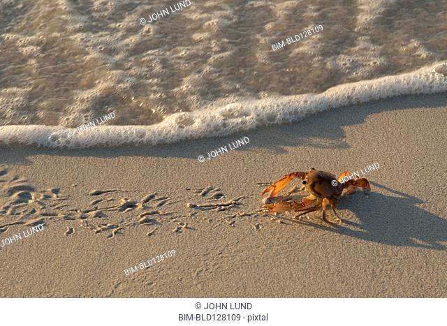 Crab walking on sandy beach