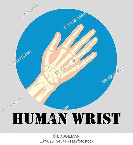 Human wrist joint emblem, medicine clinic symbol design, joints diagnostics center, flat design logo, vector