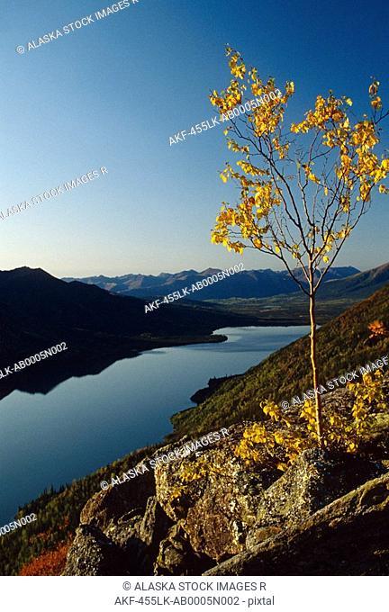 Aspen Tree Selby Lake Brooks Range Fall AK Gates of the Arctic NP Arctic scenic