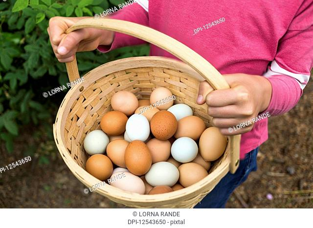 A girl holding a basket of fresh eggs; Salmon Arm, British Columbia, Canada