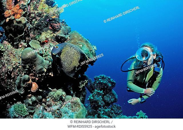 Scuba diver and coral reef, Caribbean Sea, Netherlands Antilles, Bonaire