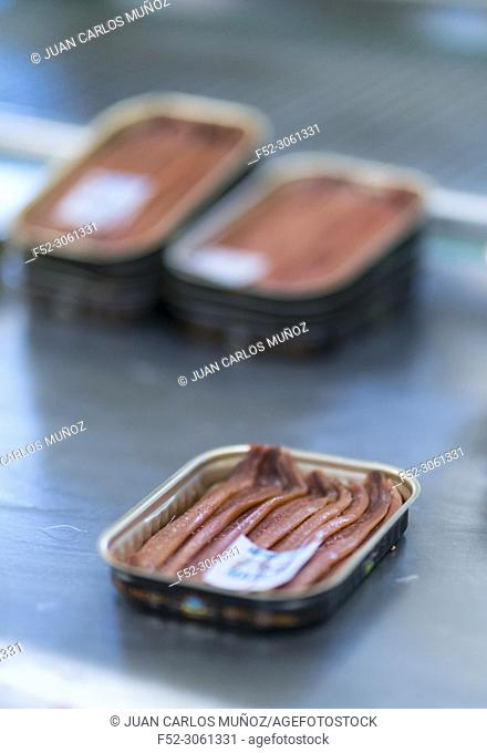 Artisanal manufacture of cantabrico anchovies, Codesa anchovy factory, Laredo, Cantabrian Sea, Cantabria, Spain, Europe