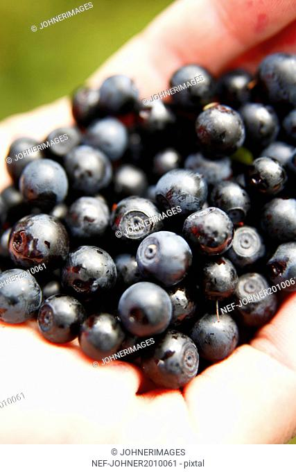Blueberries on hand, close-up