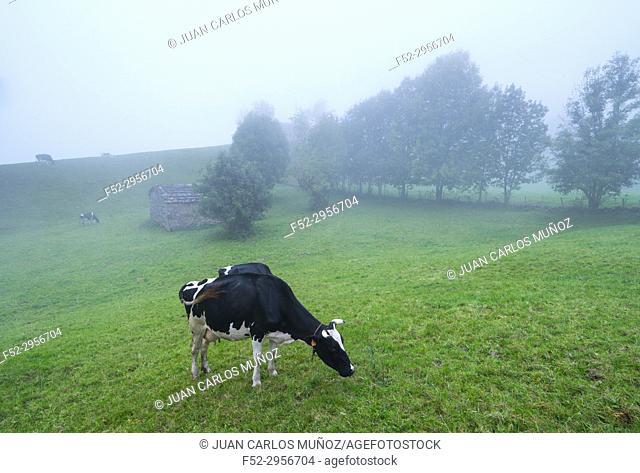 Miera Valley, Valles Pasiegos, Cantabria, Spain, Europe