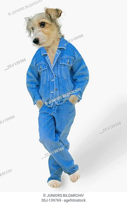 young dog in clothes