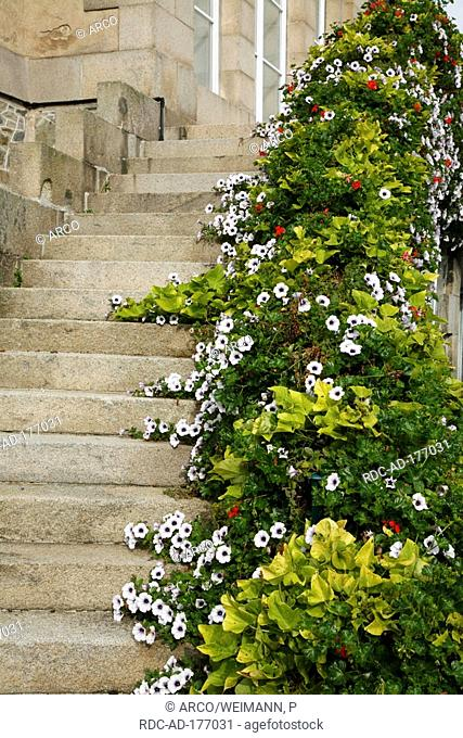 Stairs with flowers, Paimpol, Brittany, France