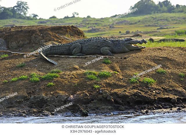 Mugger crocodile (Crocodylus palustris) by the Senanayake Samudraya Lake, Gal Oya National Park, Sri Lanka, Indian subcontinent, South Asia