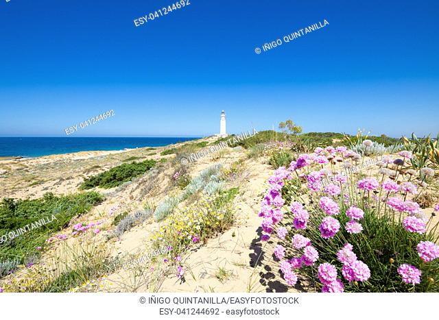 flowers, plants, shrub, and Atlantic Ocean next to the lighthouse of Trafalgar Cape Natural Park, near Canos Meca (Barbarte, Cadiz, Andalusia, Spain)