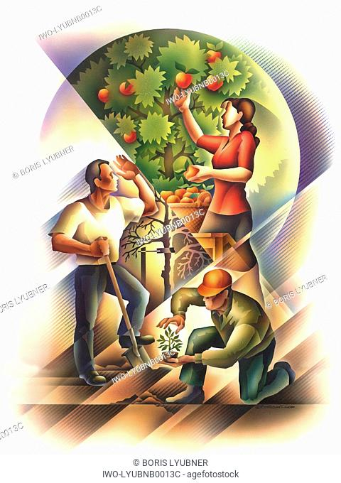 planting, watering and picking fruit from a tree