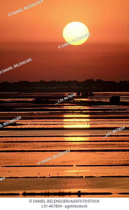 Flooded rice fields. Albufera Natural Park. Valencia province. Spain