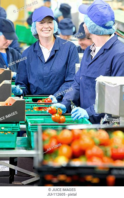Smiling workers talking and packing tomatoes in food processing plant