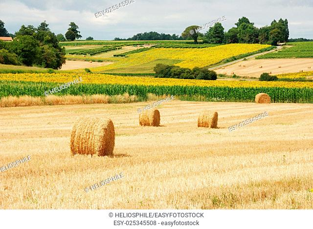 Round straw bales in harvested fields in Charentes