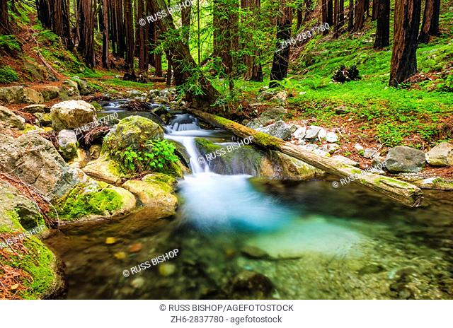 Hare Creek and redwoods, Limekiln State Park, Big Sur, California USA