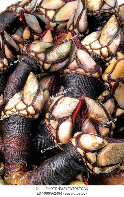 Still life of barnacles. Galicia. Spain