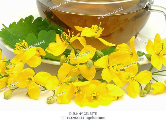 Chelidonium majus, majur, medicinal plant, tea, Celandine, Celidonia, infuso, te