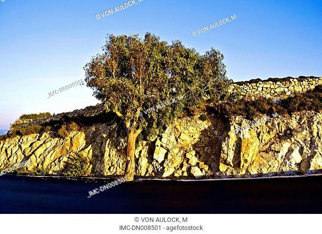Greece, Dodecanese, Patmos, tree