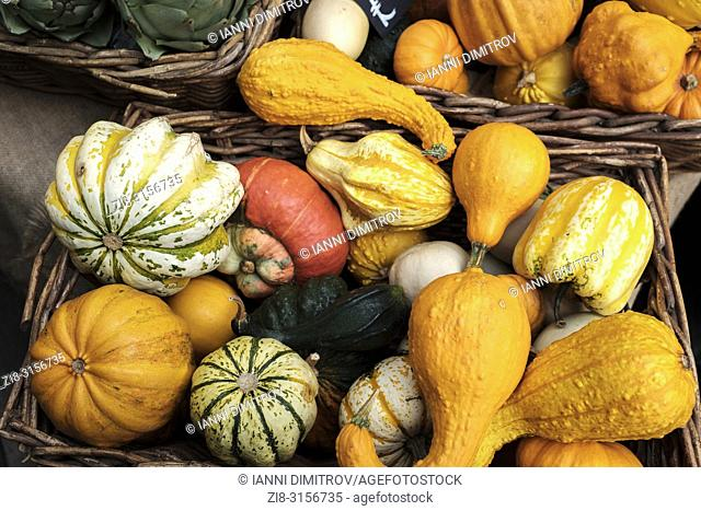 Cucurbita moschata . Squash,butternut squash , pumpkin -winter squash varieties