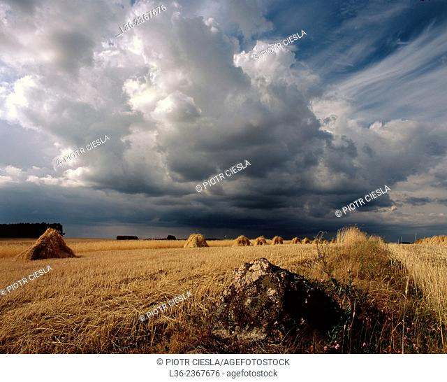 Poland. Podlasie region. Harvest time