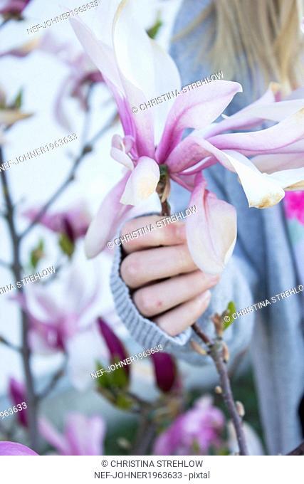 Girls hand holding magnolia flower