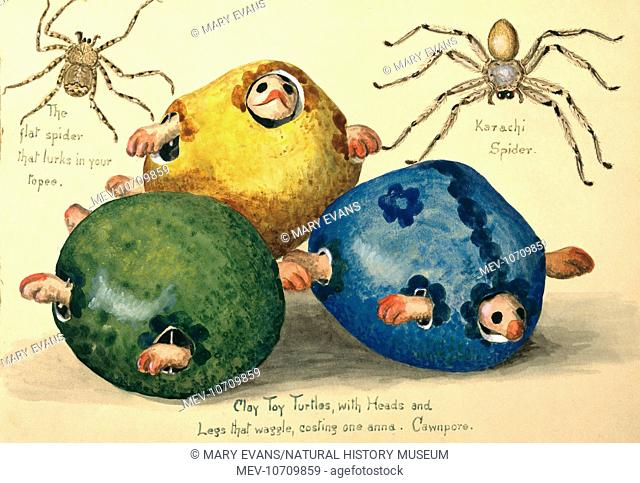 Watercolour by Olivia Fanny Tonge (1858-1949). Captioned: Clay Toy Turtles with Heads and Legs that waggle costing one anna. Cawnpore