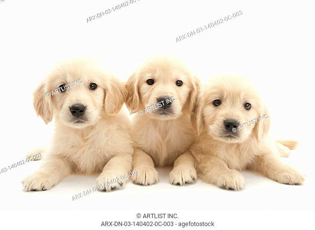 3 puppys