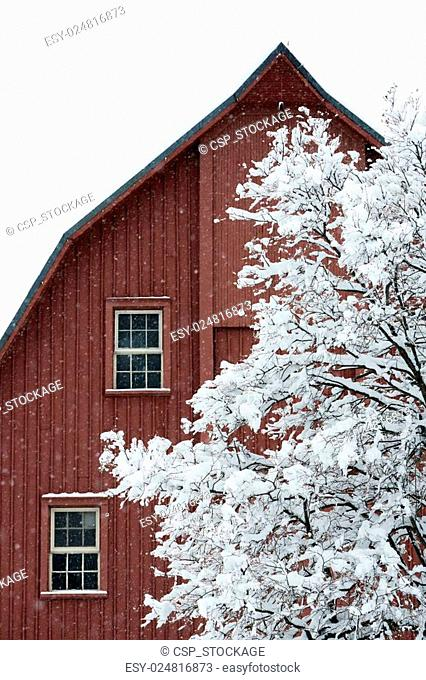 Red barn snowstorm Stock Photos and Images   age fotostock