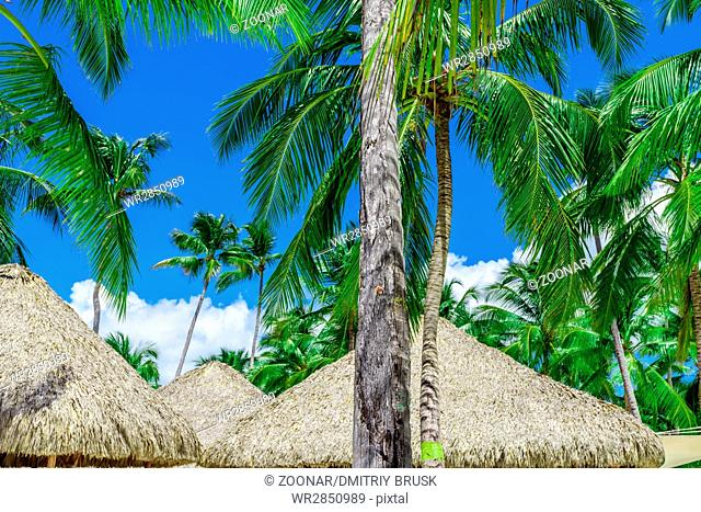 hut covered with palm leaves