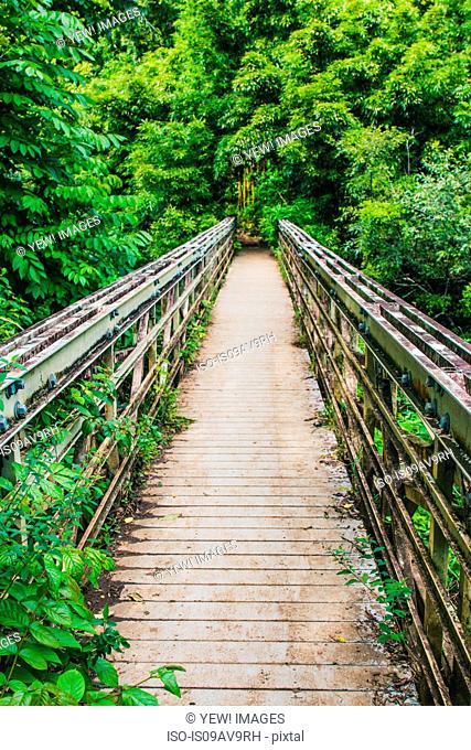 Wooden footbridge in rainforest, Haleakala, Hawaii, USA