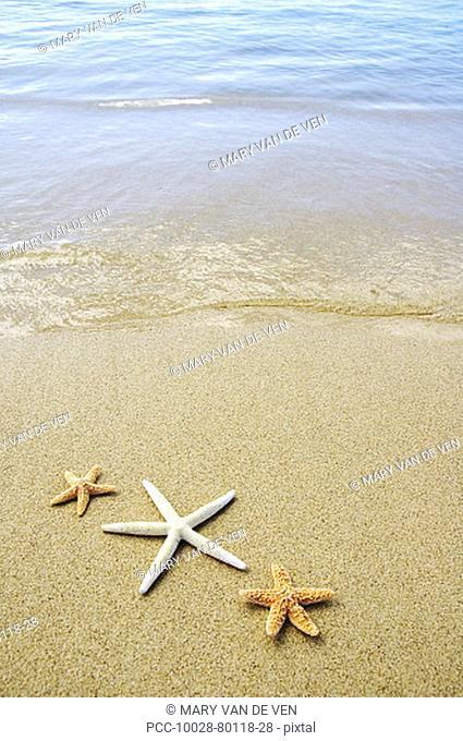 Three seastars on sand with ocean washing in