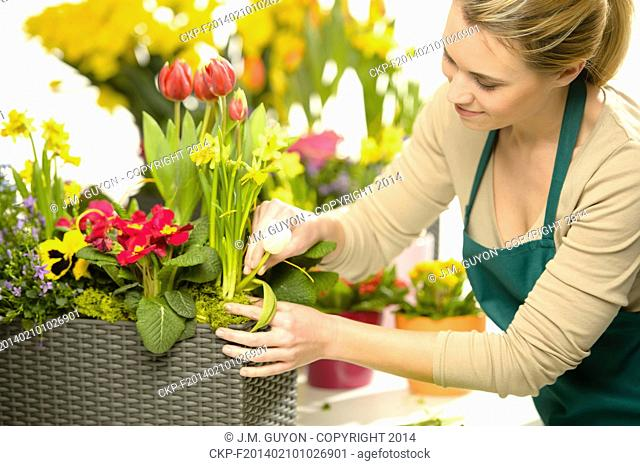 Florist arrange spring flowers colorful potted plants garden shop