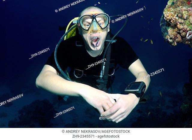 diver and cleanerfish,Bluestreak wrasse or cleanerfish (Aspidontus taeniatus), Red Sea, Egypt, Africa