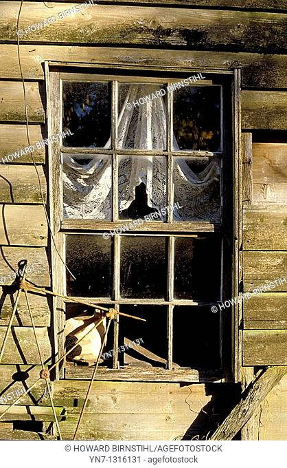 window in old derelict building with the lace curtains harking back to better days